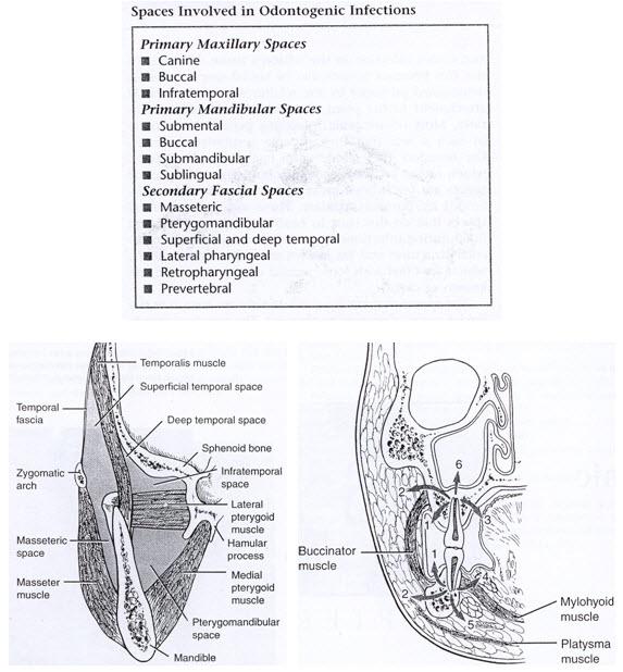 descending-gambar-rongga-tulang-3